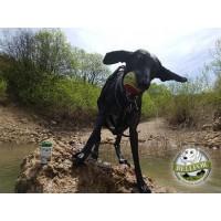 Hüftdysplasie bei Hunden: Ursachen, Symptome und Behandlung